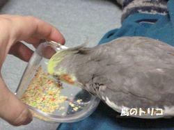 13 ポーちゃんのペレット(ズプリーム)を食べるガオちゃん.JPG