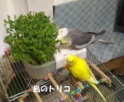 14 2018_08_02 18時23分 夕方の放鳥写真ー2.jpg