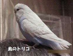 1 あおちゃん放鳥写真.JPG