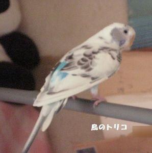 2 ぽっぽちゃん放鳥写真.JPG