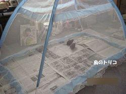 2 ヒメ達と蚊帳のサイズ.JPG