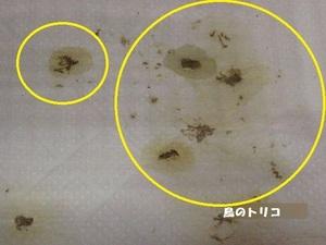 3 ケージ内の多尿写真.JPG