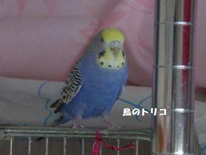4 2007-02-07 蓬ちゃん亡き後の放鳥時写真.JPG