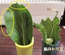4 2羽の野菜の残り具体.JPG