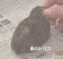 4 お散歩ひめちゃん.JPG