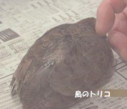 5 コリコリひめちゃん.JPG