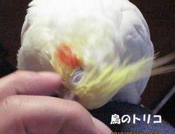 8 コリコリ写真.JPG