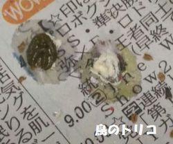 8 夕方までのガオちゃんの糞写真.jpg