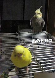 10 2羽の放鳥風景.JPG