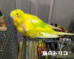 10 リラックスポーちゃん.jpg