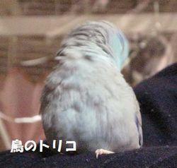 10 放鳥蘭丸君.JPG