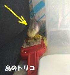 10 秘密基地籠もるガオちゃん.jpg