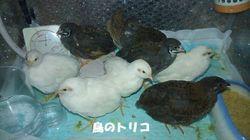 1 ヒメちゃん達9羽写真.jpg