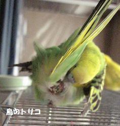 12 毛繕い中.JPG