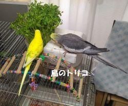 13 2018_08_02 18時23分 高木さんへ送った 夕方の放鳥写真ー1.jpg
