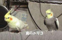 14 逃げるポポちゃん.JPG