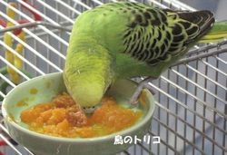 16 ニンジンを食べるドリちゃん.JPG