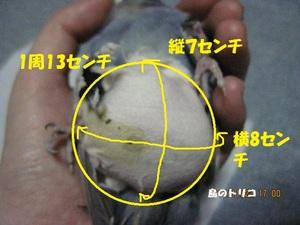 16 最後の腫瘤とカバー写真 - コピー.JPG