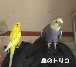 1 2019_05_01 11時22分 お預かり初日写真.jpg