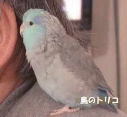 1 放鳥中の蘭丸ちゃん.JPG