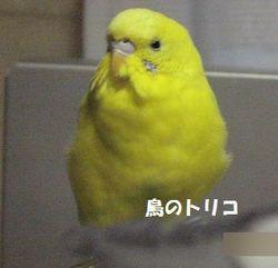 1 朝一番の放鳥ポーちゃん.JPG