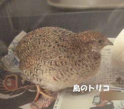 1 茶子ちゃん写真.JPG