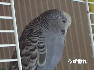 2006-08-21 135圧縮版.JPG