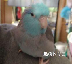 2 高木さんへ送った蘭丸ちゃん写真.jpg