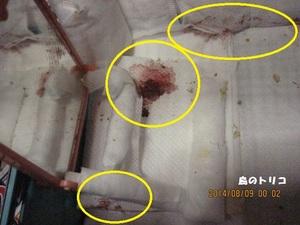 22 同出血痕の残るケージ内写真.JPG