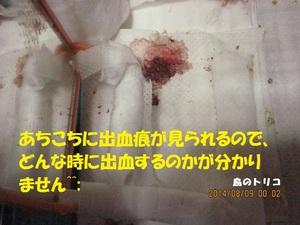 23 同ケージ内写真.JPG