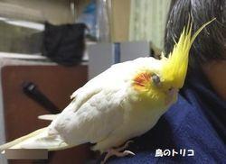 24    2020_12_25    21時36分     放鳥中のポポ写真.jpg