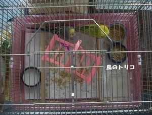 2 2006-12-12 闘病中の蓬ちゃんと一緒のケージへ309圧縮版.JPG