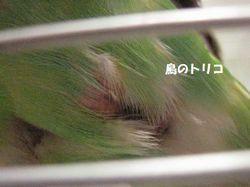 2 お腹写真.JPG