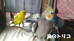2 ポーちゃん体逃げるガオちゃん.jpg