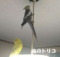 2 冒険家ガオちゃん.jpg