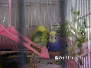 3  2006-12-19 蓬ちゃんに寄り添うチロルちゃん.JPG