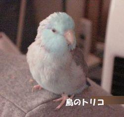 3 その後の放鳥写真.JPG