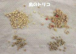 3 右下:イースター社 左:黒瀬フー粒比較.JPG