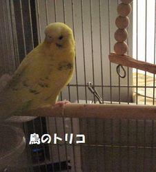 3 放鳥準備中のポーちゃん.JPG