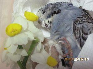 3 生きている時のままで花も綺麗.JPG