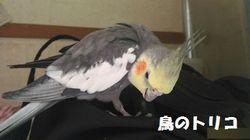 3 秘密基地でカジカジするガオちゃん.jpg