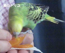 4 ゆでたニンジンを食べるドリちゃん.JPG