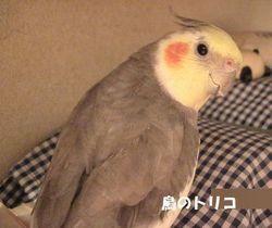4 ポーちゃんの定位置棒へ行くガオちゃん.JPG