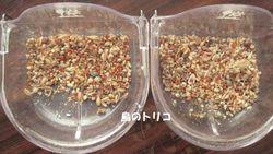 4 左:ドリちゃん 右:ポーちゃんの餌の残量.JPG