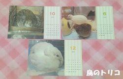 4 我が家の子達のカレンダー写真.jpg