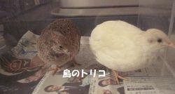 4 茶子とましろちゃん.JPG