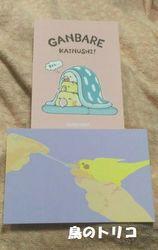 5 おまけのカード.jpg