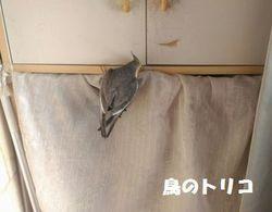 5 今回のガオちゃんの秘密基地.jpg