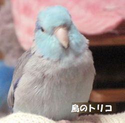 5 蘭丸ちゃんの放鳥写真.JPG