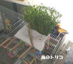 5 野菜バイキング場レイアウト−2.jpg